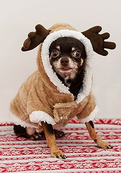 Dog Reindeer Sweater product image (reindeer.1-S)